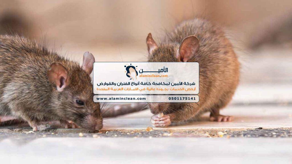 شركة مكافحة فئران، العين، الشارقة، دبي، الفجيرة، رأس الخيمة، أبوظبي، عجمان، أم القيوين،