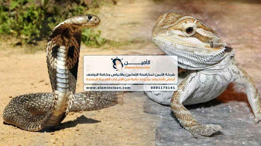 شركة مكافحة ثعابين، العين، الشارقة، دبي، الفجيرة، رأس الخيمة، أبوظبي، عجمان، أم القيوين،