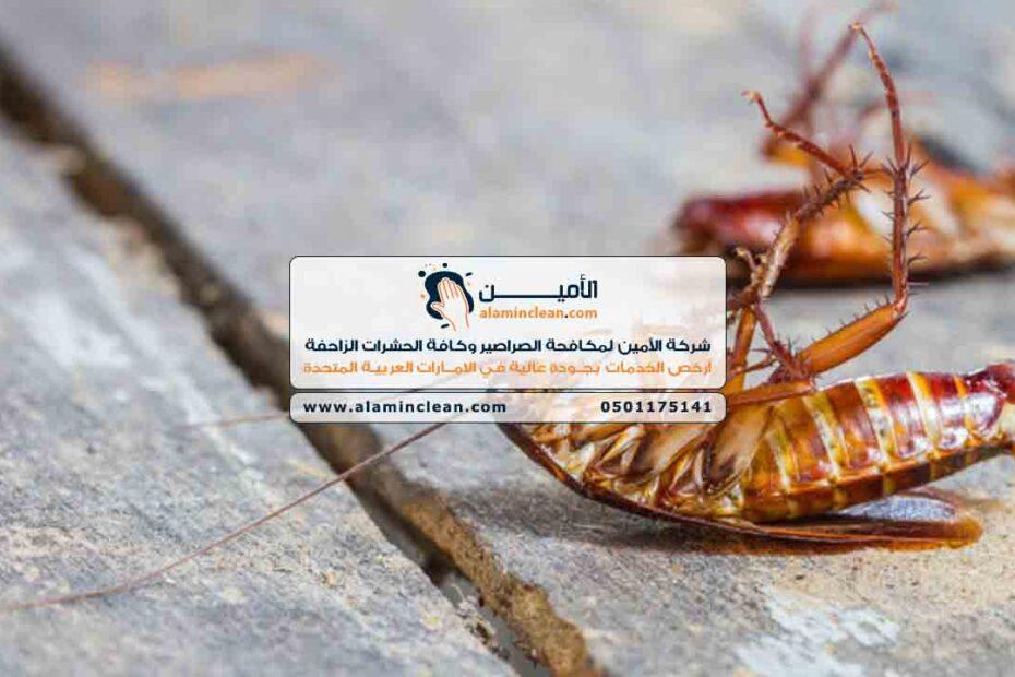 شركة مكافحة صراصير في العين، الشارقة، دبي، الفجيرة، رأس الخيمة، أبوظبي، عجمان، أم القيوين