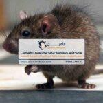 شركة مكافحة فئران في العين، الشارقة، دبي، الفجيرة، رأس الخيمة، أبوظبي، عجمان، أم القيوين