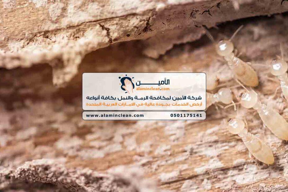 شركة مكافحة الرمة في العين، الشارقة، دبي، الفجيرة، رأس الخيمة، أبوظبي، عجمان، أم القيوين